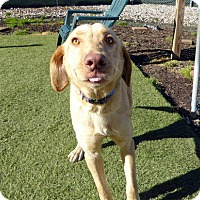 Adopt A Pet :: Shelby - Buckeystown, MD