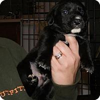 Adopt A Pet :: Corbin - mooresville, IN