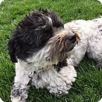 Adopt A Pet :: Teddy - Beavercreek, OH