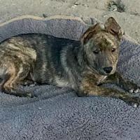 Adopt A Pet :: Oliver - Long Beach, CA
