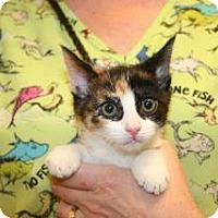 Adopt A Pet :: Calypso - Wildomar, CA