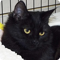 Adopt A Pet :: Lace - Grants Pass, OR