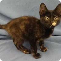 Adopt A Pet :: Bonita - Olive Branch, MS