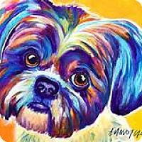 Adopt A Pet :: Pumpkin - Coming Soon - Palm Coast, FL