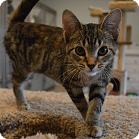 Adopt A Pet :: Lily - St. Charles, MO