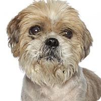 Adopt A Pet :: Damoscinos - Oakland Park, FL