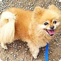Adopt A Pet :: Pax-ADOPTION PENDING - Boulder, CO