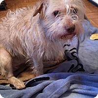 Adopt A Pet :: Cody - Bernardston, MA