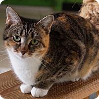 Adopt A Pet :: Fern - Maynardville, TN