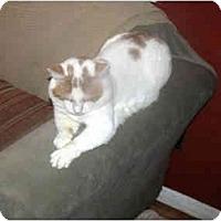 Adopt A Pet :: Logan - Xenia, OH
