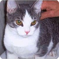 Adopt A Pet :: Tom - Syracuse, NY