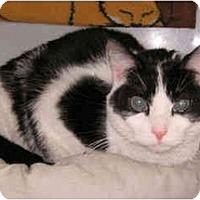 Adopt A Pet :: Poona - Colmar, PA