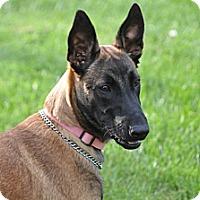 Adopt A Pet :: Anna - Hamilton, MT