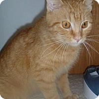 Adopt A Pet :: Jenna - Hamburg, NY