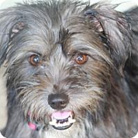 Adopt A Pet :: KellieMay-MeetHer - Norwalk, CT
