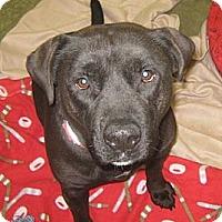 Adopt A Pet :: Watson - Lake Odessa, MI