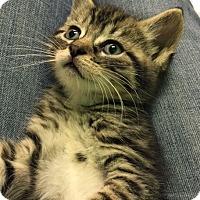 Adopt A Pet :: Georgie - Riverhead, NY
