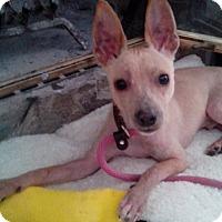 Adopt A Pet :: Fedor - Lebanon, CT