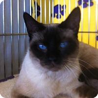 Adopt A Pet :: Mocha L - Sacramento, CA