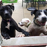 Adopt A Pet :: Emmie - Pittsburgh, PA