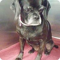 Adopt A Pet :: June - Lakeland, FL