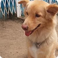 Adopt A Pet :: 'PANG PANG' - Agoura Hills, CA