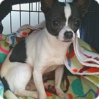 Adopt A Pet :: Django - Waxhaw, NC
