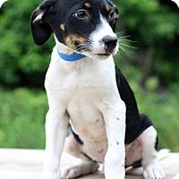Adopt A Pet :: Fritz - Waldorf, MD