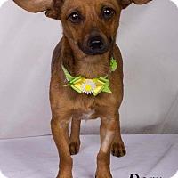Adopt A Pet :: Dory - Baton Rouge, LA