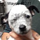 Adopt A Pet :: Wayne