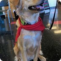 Adopt A Pet :: Dory - Minnetonka, MN