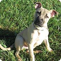 Adopt A Pet :: Mikey - High Point, NC