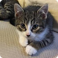 Adopt A Pet :: Fripp - Island Park, NY