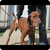 Adopt A Pet :: Scooby - St. Catharines, ON