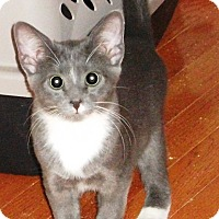 Adopt A Pet :: Charles -Adoption Pending! - Colmar, PA