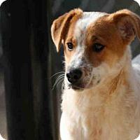 Adopt A Pet :: SCROOGE - Lacombe, LA
