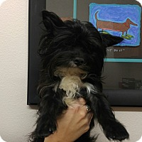 Adopt A Pet :: Cody - Conroe, TX
