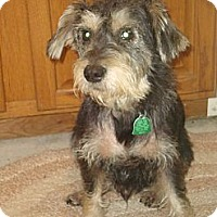 Adopt A Pet :: Zack - Daleville, AL