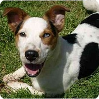 Adopt A Pet :: Toby - Harrah, OK