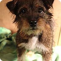 Adopt A Pet :: Topanga - Bedminster, NJ