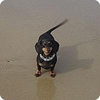 Adopt A Pet :: LUNA - Portland, OR