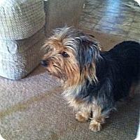 Adopt A Pet :: Pilgram - Goodyear, AZ
