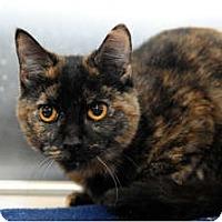 Adopt A Pet :: Aria - Farmingdale, NY