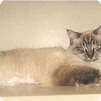Adopt A Pet :: Galen - Mesa, AZ