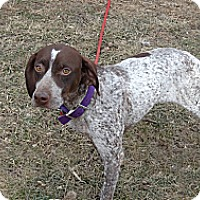 Adopt A Pet :: Jill - ADOPTION PENDING - Streetsboro, OH