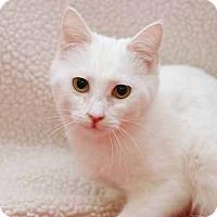 Adopt A Pet :: Thumbelina - San Antonio, TX