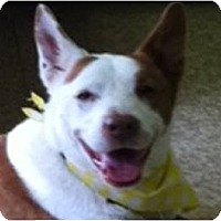 Adopt A Pet :: Adele - COURTESY LISTING - Cleveland, OH