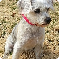 Adopt A Pet :: Bai-Adoption pending - Bridgeton, MO