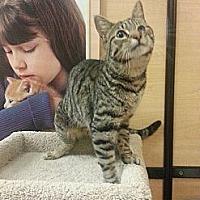 Adopt A Pet :: Sundance - McKinney, TX