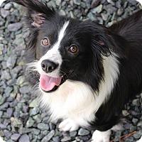 Adopt A Pet :: Charlotte - Pinehurst, NC